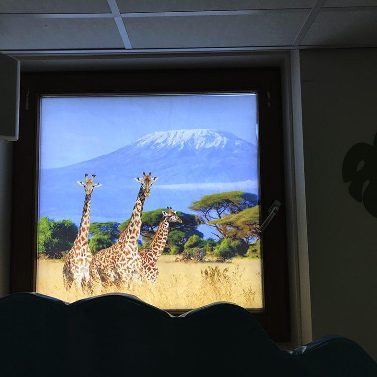 festa glasfolie giraffen