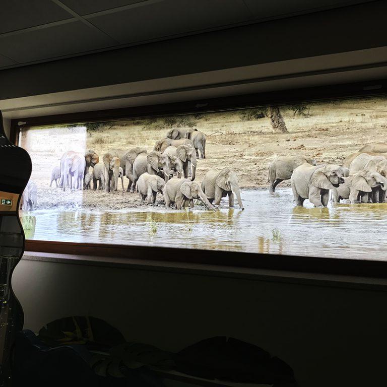 festa glasfolie olifanten