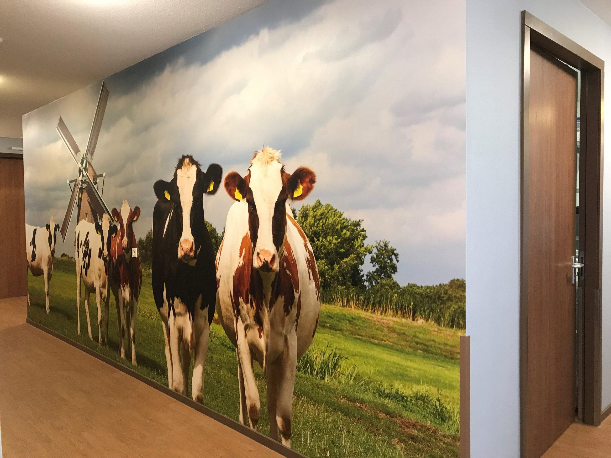Fotobehang met koeien